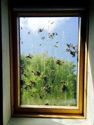 Fensterreinigung vorher