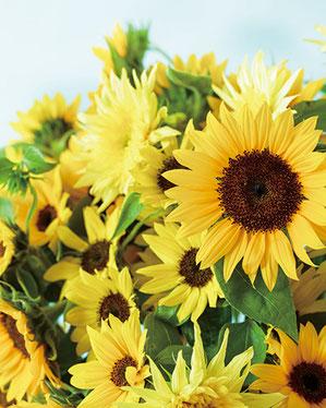 7月4日(火)は元気よく咲く変わり咲きヒマワリを使ったアレンジメントをつくります。(画像はイメージです)