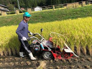 金山さんが稲刈りをする様子