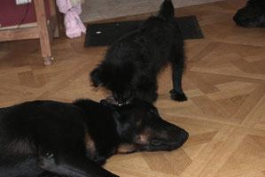 Ecyo bekommt die Ohren geputzt
