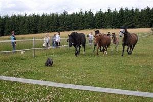 Enaya und die Pferde