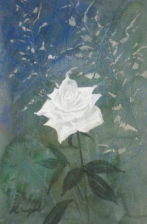 「白バラ」4号