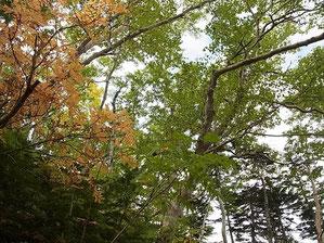 木々も色づき始めています。