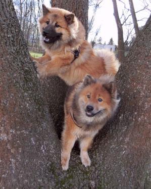 Bia und Ronja im Baum ...