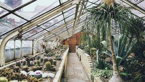 Serre oder Orangerie für das Schloβ Belle Epoque in Linxe 40