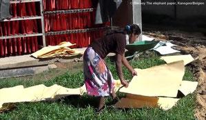 Papierherstellung aus Elefantendung, Sri Lanka