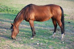 Cuty Smootchy, Quarter Horse, Stute, geb. 1998