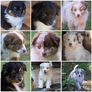 Royal black bear, Rika, R'Louna, Rili-sansa, Rana, R'Oslo, Rixie, Ron, Rimmel