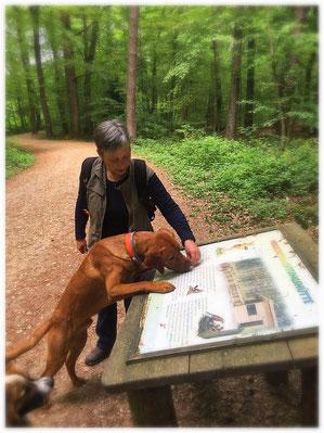Hundetraining Bonn