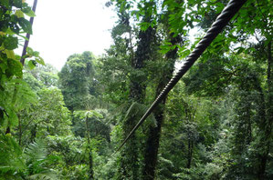Canopy tour near Arenal