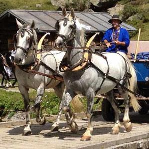 Hochzeit ins Dischmaltal Alp am Rhiin