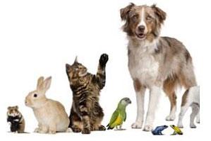 Tierhilfe für die Region Basel