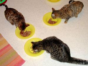 Hotelrestaurant mit riesiger Auswahl. Auch Spezialmenüs für Diabetikerkatzen