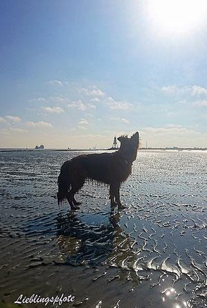 Watt vor Cuxhaven, im Hintergrund die Kugelbake