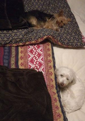 Amande (unten) hat ihr Glück und zwei Hundefreunde in Leverkusen gefunden.