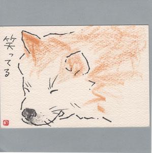 秋田犬(笑ってる)