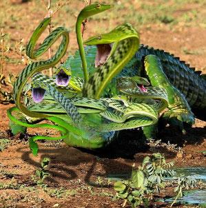 """""""Hydra"""" - AidanW"""