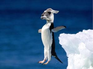 """""""Penguin-Llama"""" by Nat B"""
