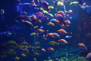 色とりどりの熱帯海水魚