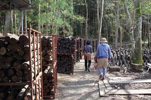 栽培地には何千本もの「ぼだ木」があった