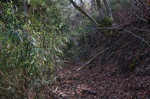 道は藪に塞がれて進めなくなっていた