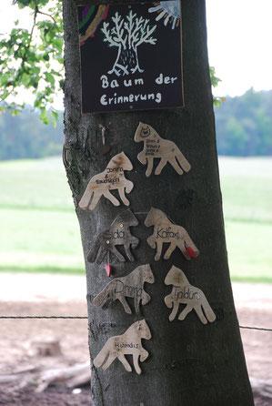 Regenbogenbaum auf Vindmylla