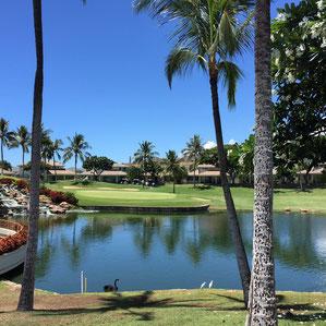 ハワイ オアフ ゴルフコース送迎 コオリナゴルフクラブ ハワイの美しいゴルフコース 水辺 パームツリー