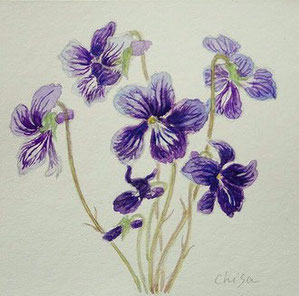 スミレ  Violets (Watercolor painting)