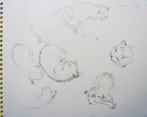 Cat (Pencil drawing)
