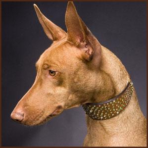 Reitsport Heiniger, Schönbühl - Blogartikel Hundehalsbänder von Diamond Dogs