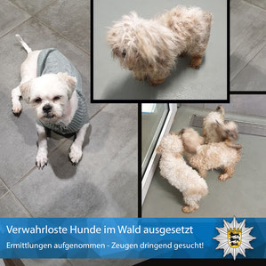 Verwahrloste Hunde PP Mannheim