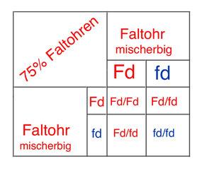 Vererbung Faltohr Gen, © Birgitta Kuhlmey, 07/2020
