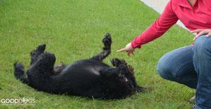 GOOD DOGS Hundeschule - Heusenstamm - Rodgau - Obertshausen - Erziehung - Hund - Tricks