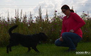 GOOD DOGS Hundeschule - Heusenstamm - Rodgau - Obertshausen - Erziehung - Hund - Rückruf