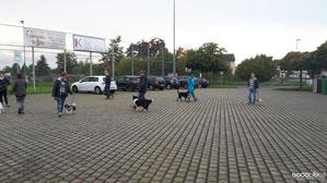 GOOD DOGS Hundeschule - Heusenstamm - Rodgau - Obertshausen - Erziehung - Hund - Begegnung