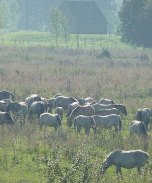 Naturpark Maas-Schwalm-Nette