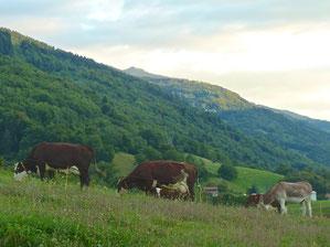 Les laitières et Muguet profitent de la fraicheur du soir