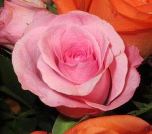 Syamala's roses