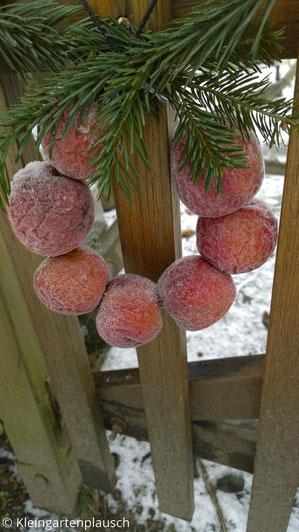 Kränzchen mit 7, von Frost überzogenen roten Äpfeln hängt an Zaun, Tannenzweig