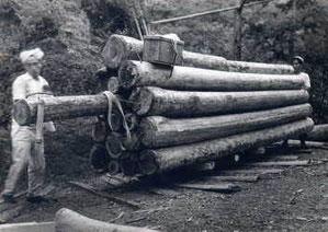 1950年代の木材搬出方法の一つ木馬(キンマ)