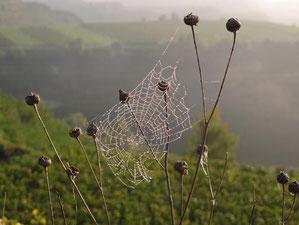 Tau legte sich über einen Spinnenfeld