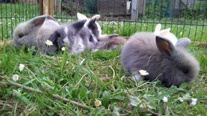 junge Kaninchen und Gras