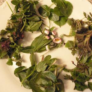 Wildkräuter gemischt,Scharbockskraut,Brennnessel, Giersch, Gänseblümchen, Spitzwegerich, Sauerampfer