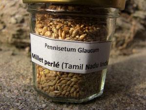Semences de millet perlé du Tamil Nadu, Inde