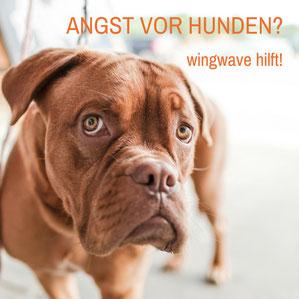 Hundephobie Hamburg - wingwave Coaching bei Angst vor Hunden