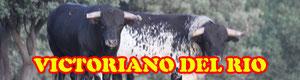 Reportaje de la Ganadería Victoriano del Rio en Soto del Real Madrid