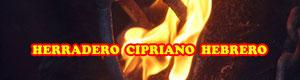 Herradero en la Finca de la Ganadería Cipriano Hebrero de Ajalvir