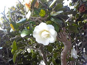 お庭のお花♬