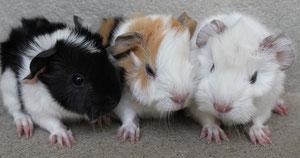 Amanda, Fatma und Bella