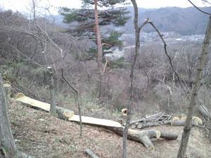 伐採木をそのまま展望台ベンチに(これは1本の木です)